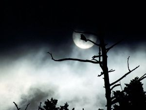 moon-fog-trees_9454_600x450